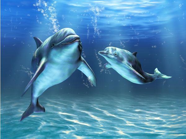 I delfini pachino affittacamere pachino